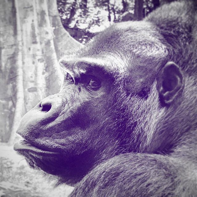 #Ernie #gorillaz