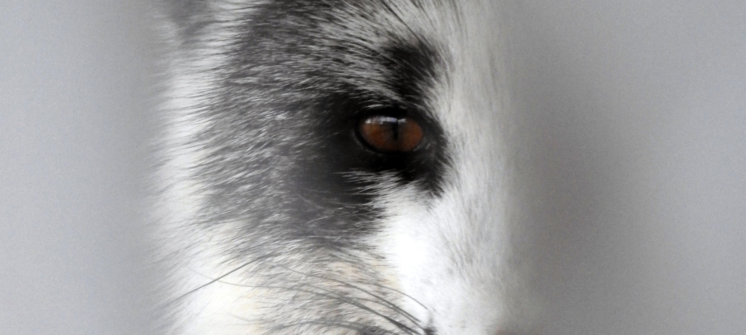 CR.fox that bit me-1.jpg