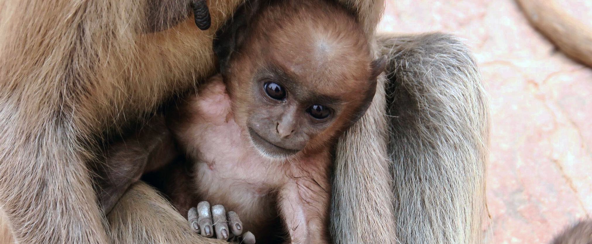 Baby with mom (1) Wmark.jpg