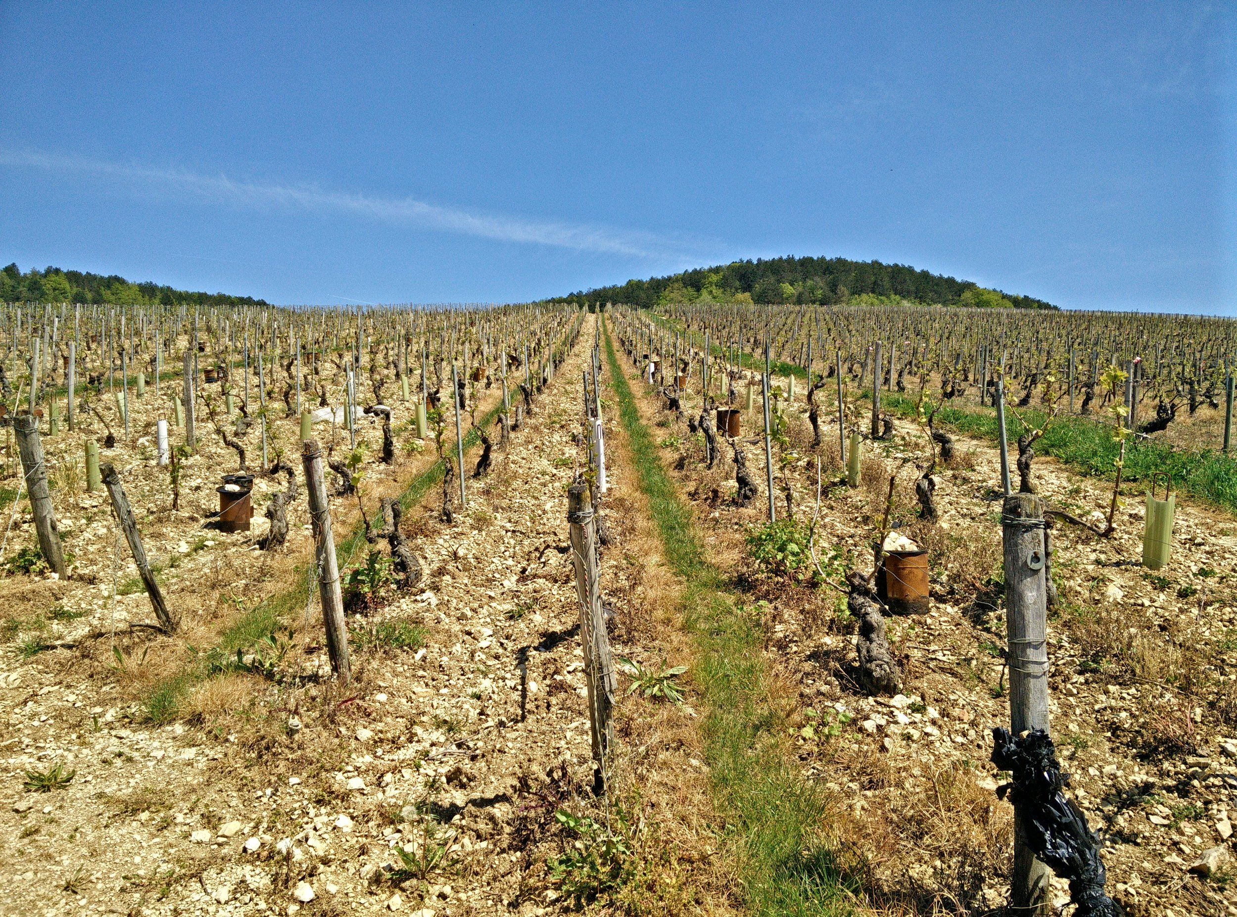 Walking around the Chablis grands crus: 'Valmur' in May 2016