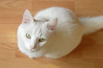 cat_sitting_sm.jpg