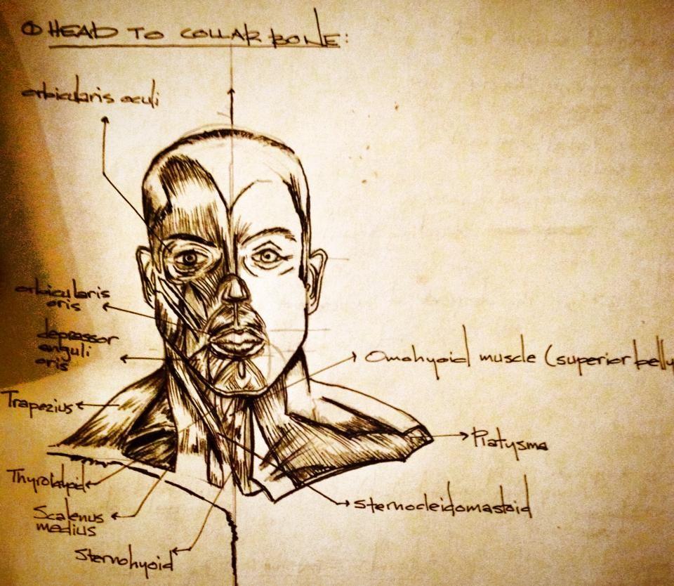 anatomy6.JPG