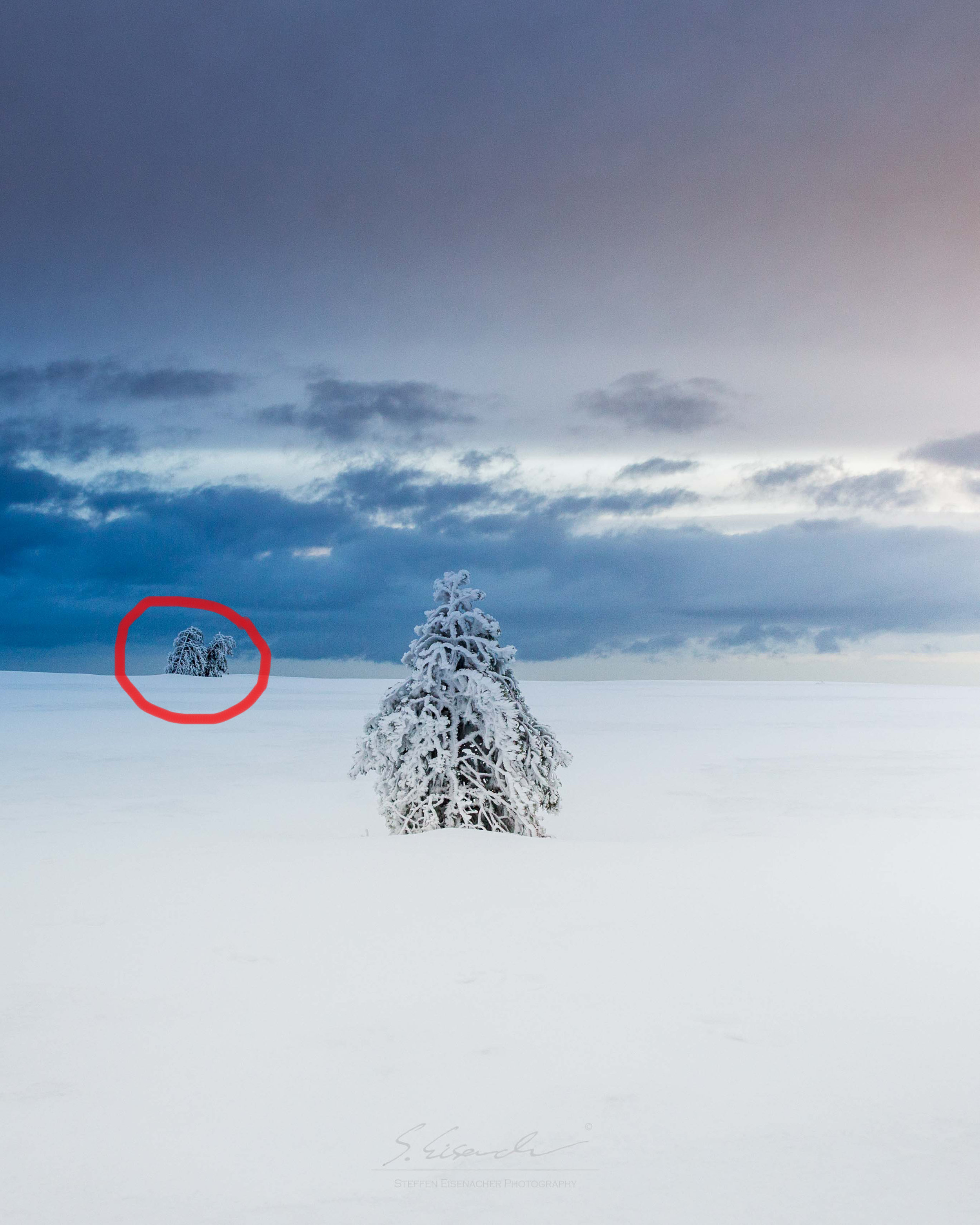 I found the tree in the background to be distracting my minimalistic composition....