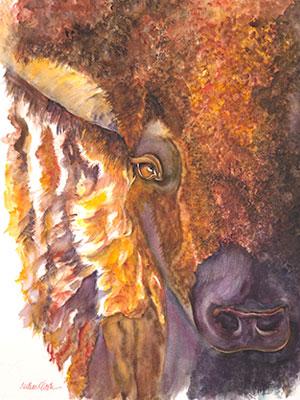 aye-buffalo.jpg