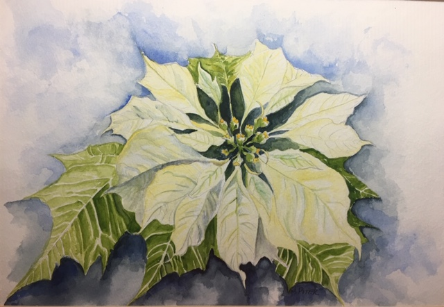 White poinsettia.jpg