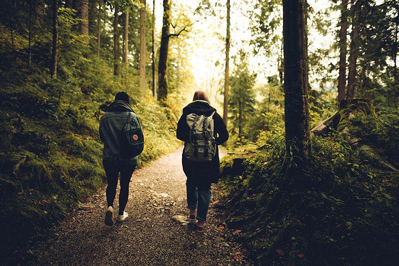 forest-friends-friendship-591216.jpg