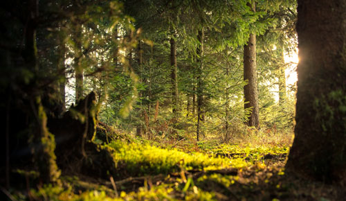 conifer-daylight-environment-338936.jpg