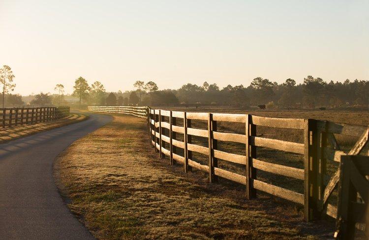 Shadow-Oak-Plantation-Lodge-driveway.jpg