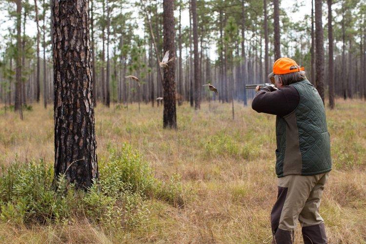 Shadow-Oak-Plantation-gunners-quail-flushing.jpg