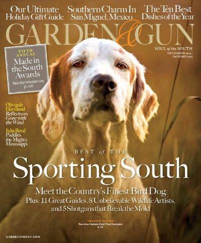 Two-time National Bird Dog Champion, Shadow Oak Bo