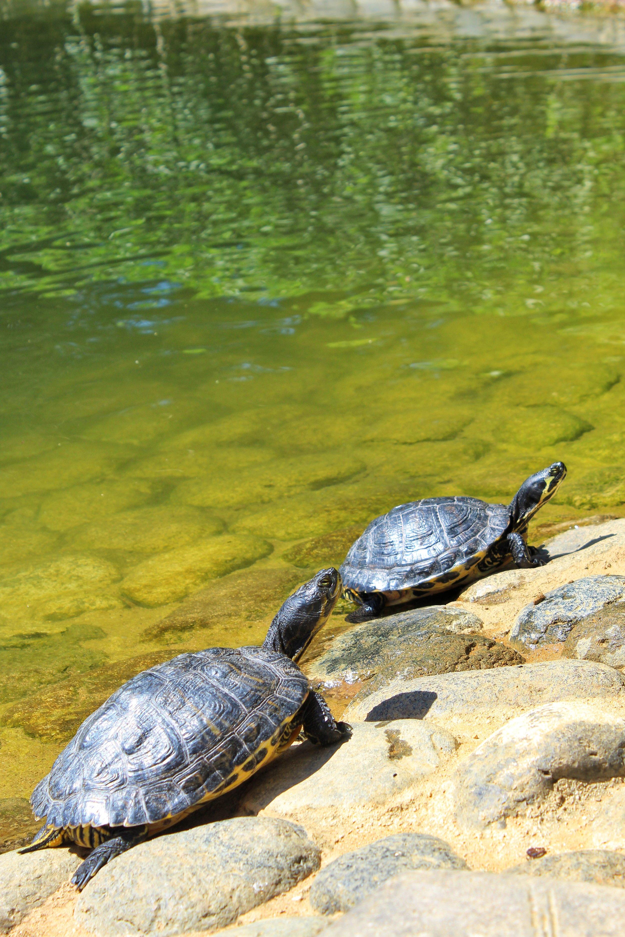 Represa Park in Marbella. These fellas are everywhere!