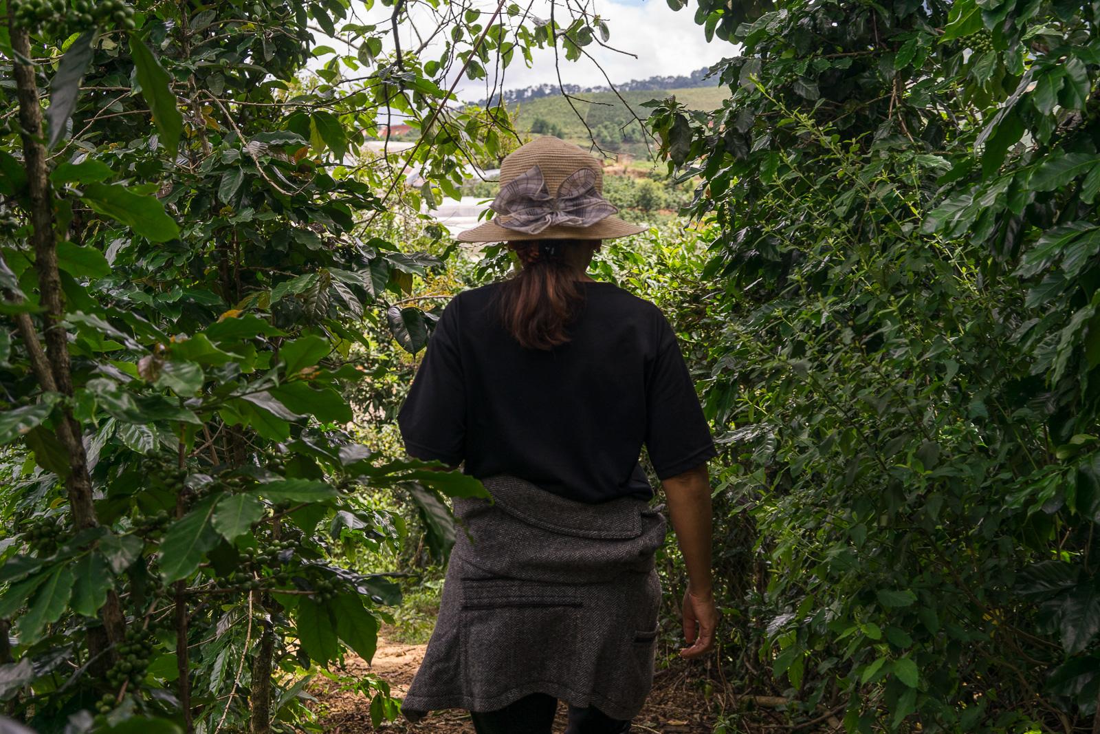 Shown around K'Ho Coffee farm.