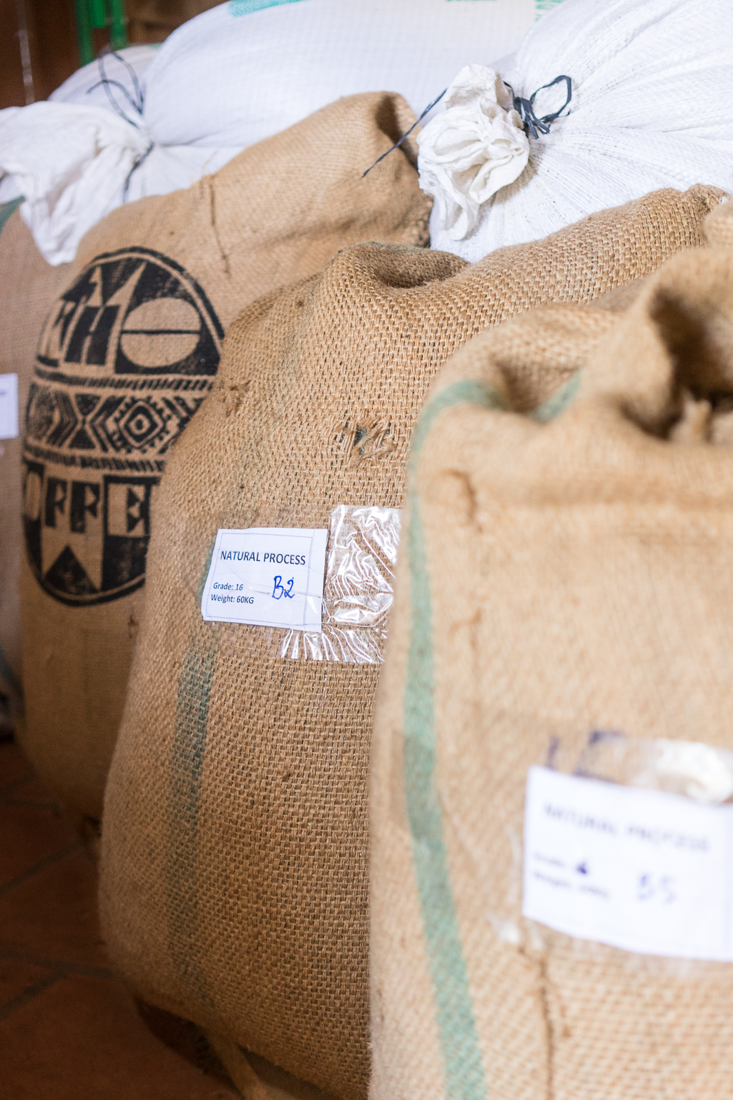 K'Ho Coffee beans for export