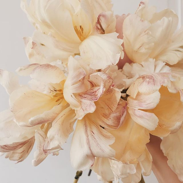 Sunday tulip day🌷