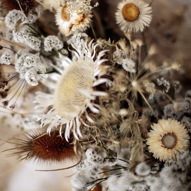 Trop fière de présenter mon premier livre sur les fleurs séchées ! 🎉 Retrouvez des conseils pour faire sécher les fleurs à la maison et 15 créations expliquées pas à pas !  Photographies par le talentueux @herve_goluza 📸 Pour les @edition_marabout 🌻