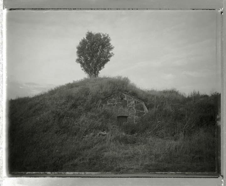 08_017_Soumelinnea_Tree_Slate.jpg