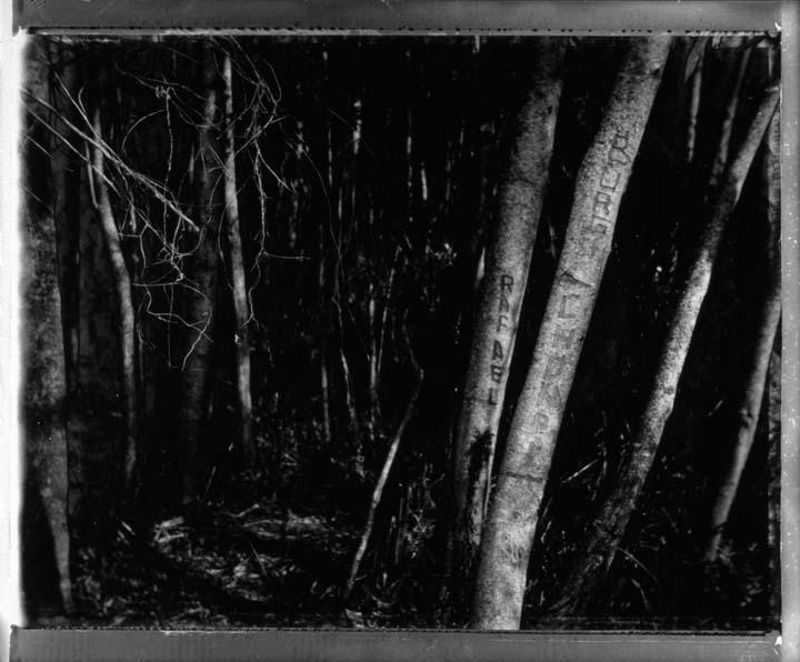 08_007_boy_forest.jpg