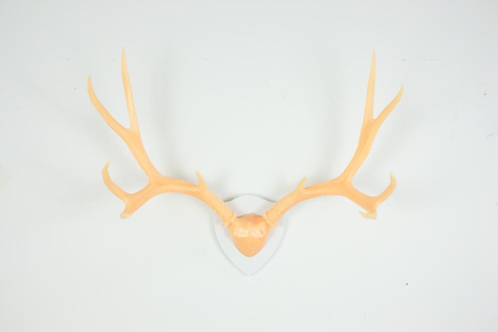 antlers-9289.jpg