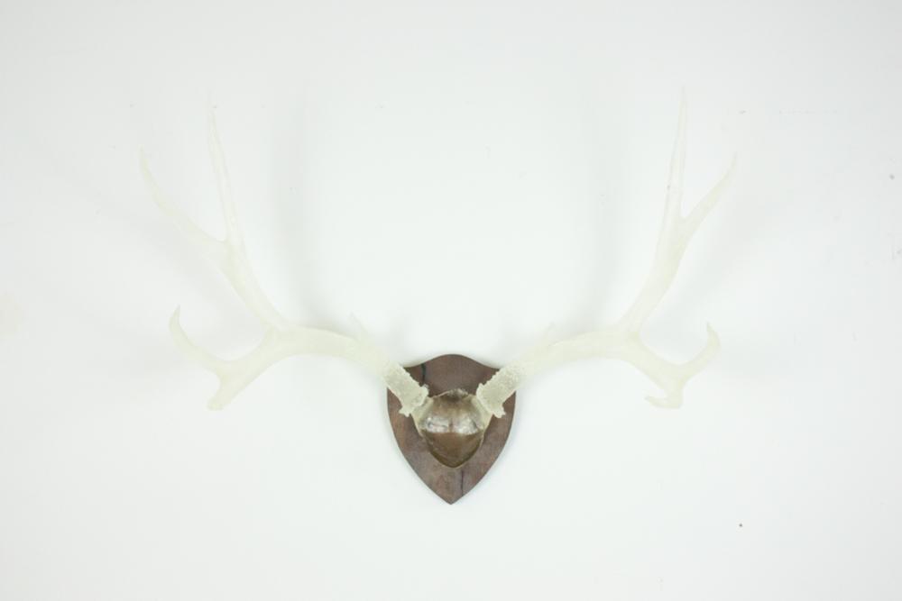 antlers-9316.jpg