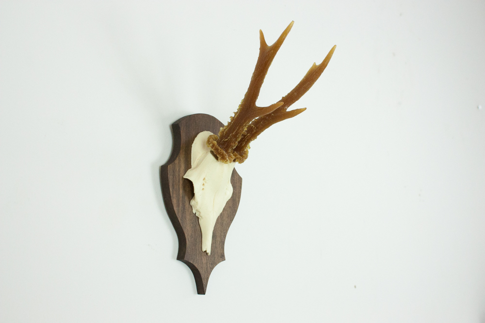 antlers-9391.jpg