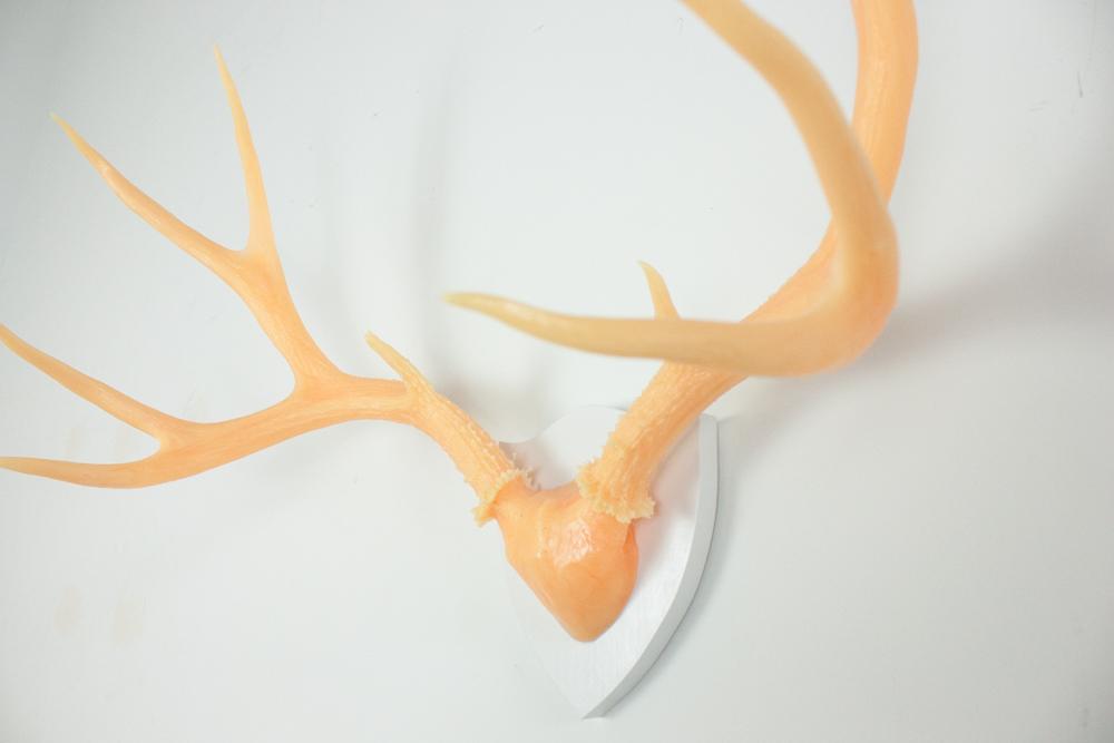 antlers-9296.jpg
