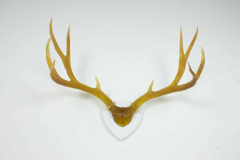 antlers-9298.jpg