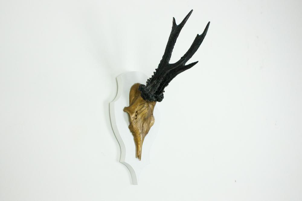 antlers-9397.jpg
