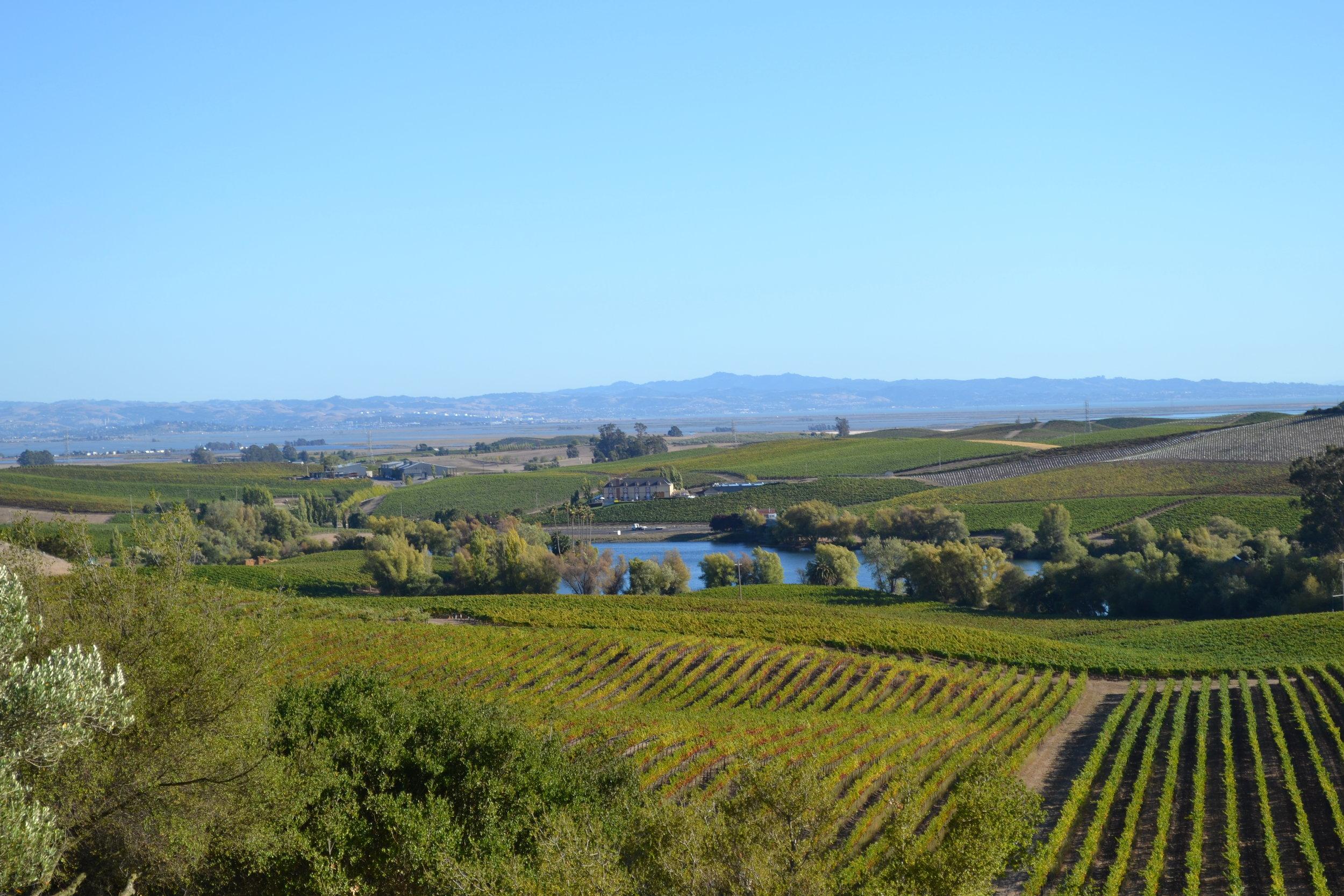 Vista de Napa Valley desde Artesa Winery