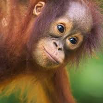 Borneo Pic 1.png