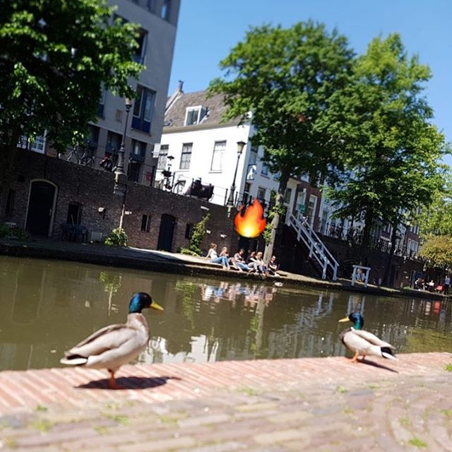 #duckingout 🦆🌞 . . Vlog about hanging out in Utrecht coming soon 🔥 . . . #hangout #hanging #chilling #chillingout #chillen #chillout #chillax #ducks #duckface #campfire #utrecht #oudegracht