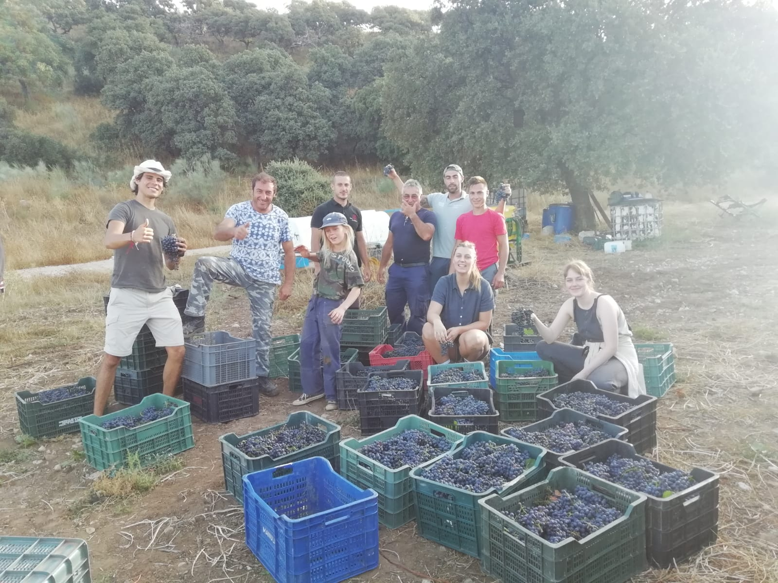 The vinyard harvest team
