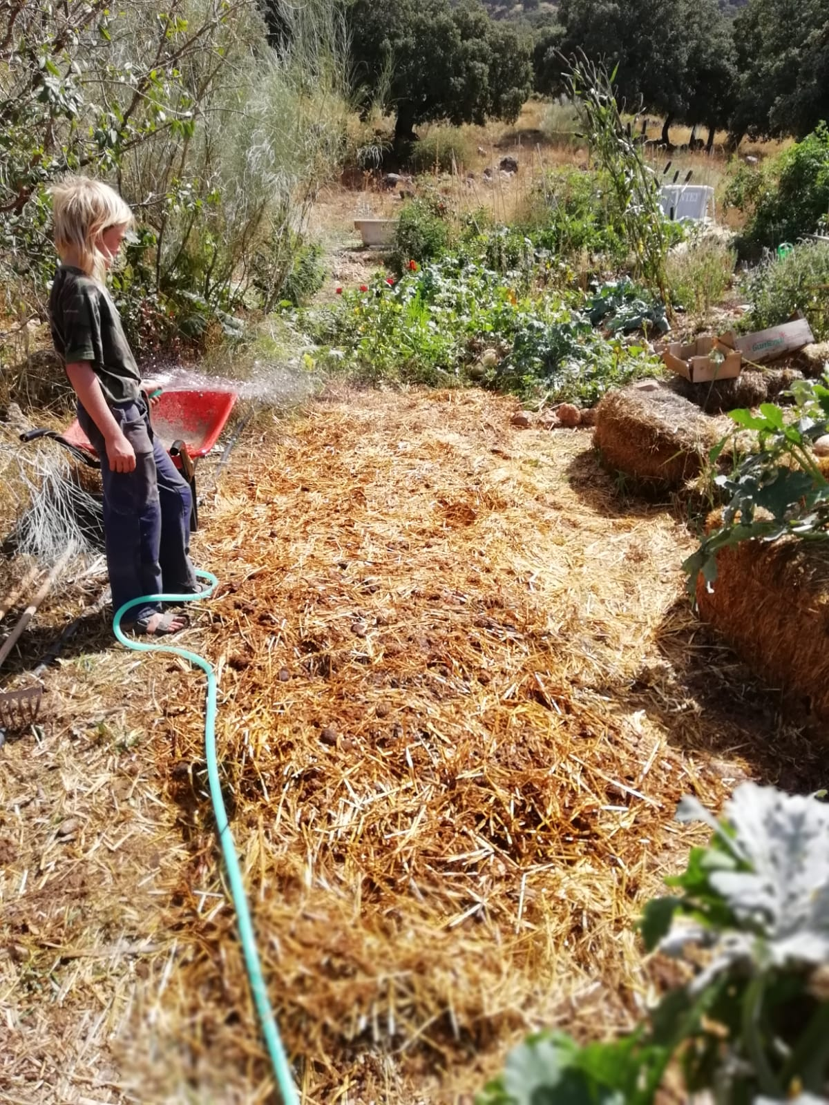Step 3: A final cap of mulch protects the topsoil, and all is watered thoroughly to ignite the decomposition process