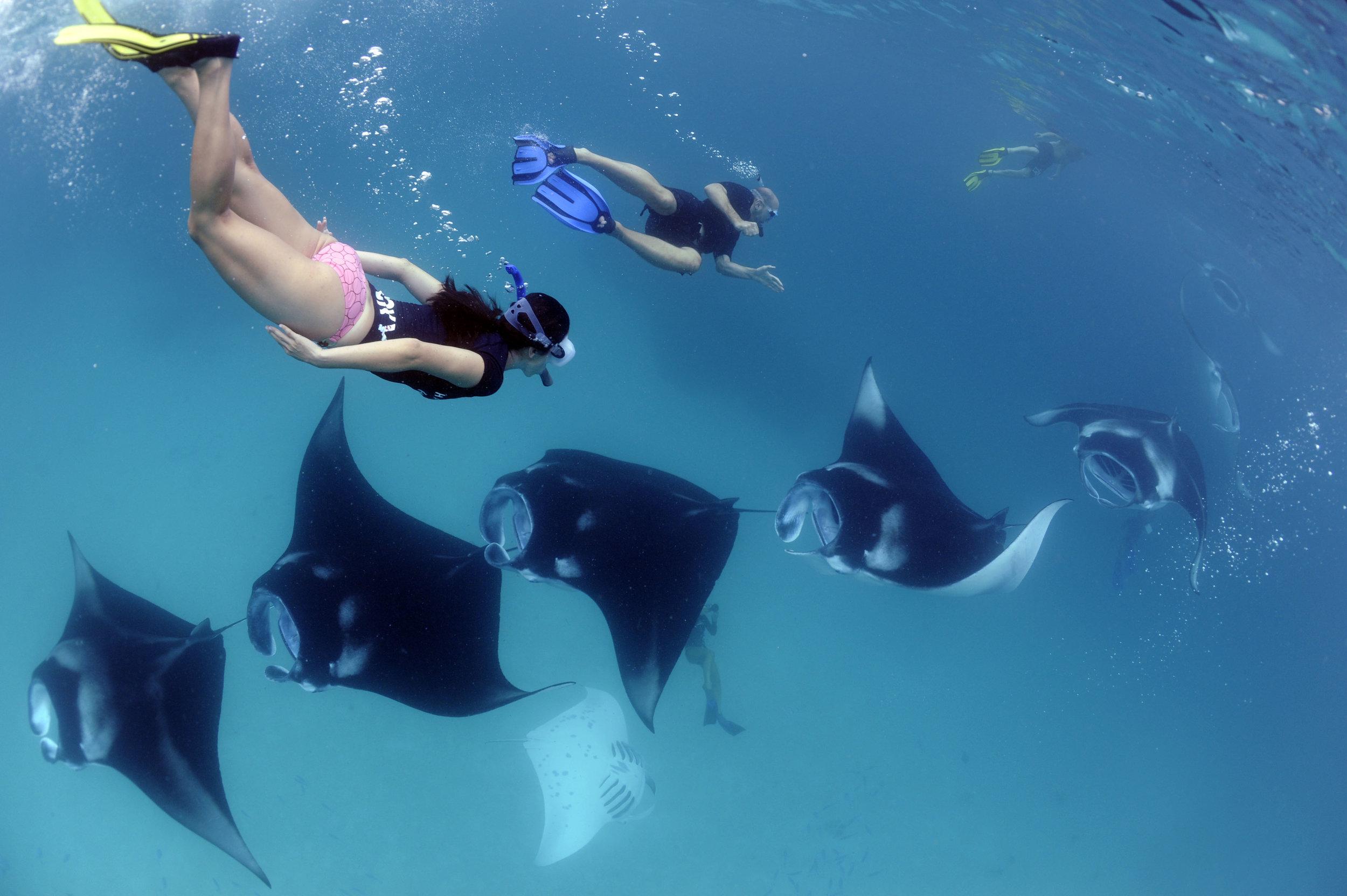 How to Swim with Manta Rays