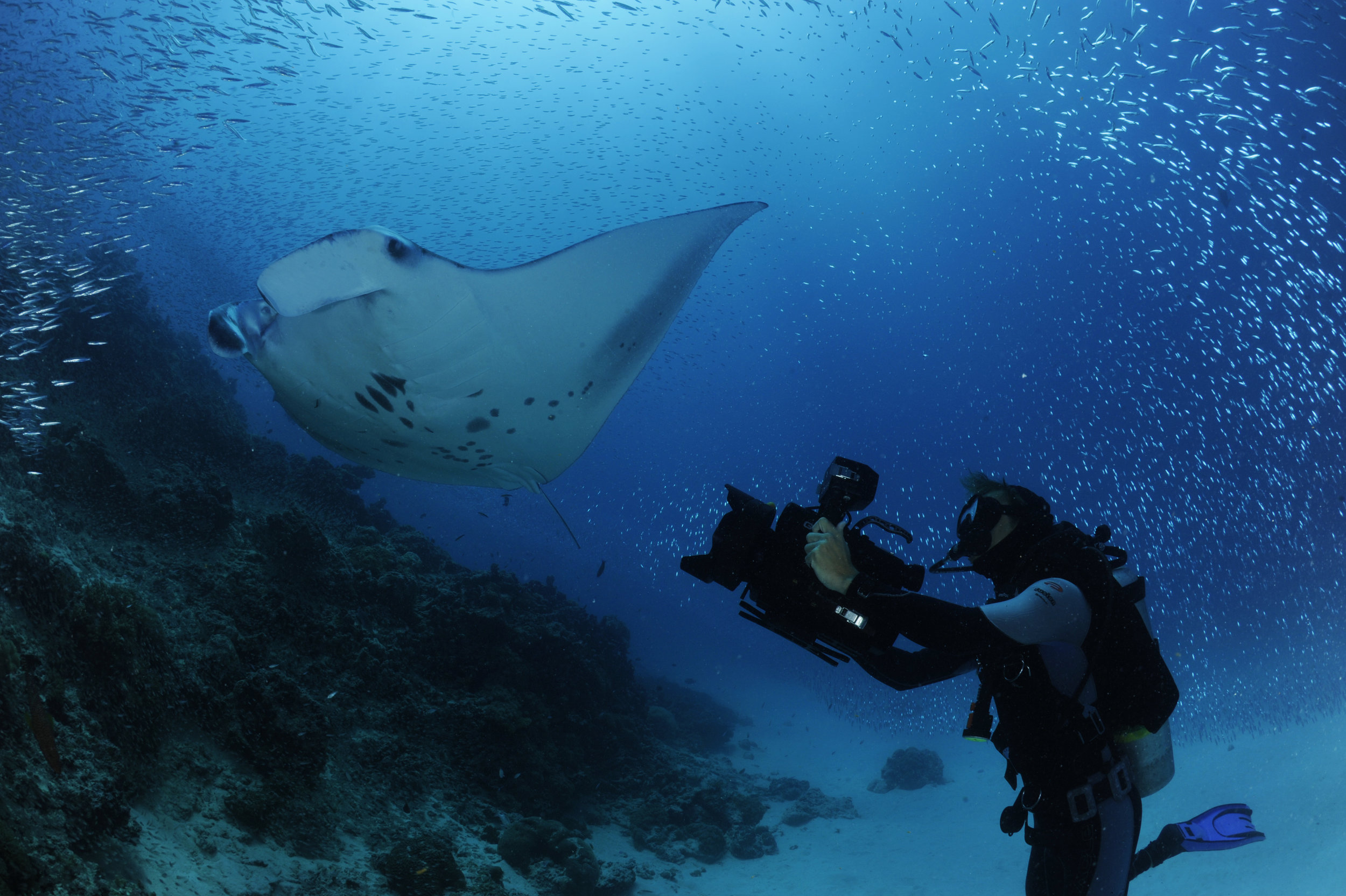 The Impacts of Tourism on Manta Rays in Baa Atoll, Maldives - Rebecca Lynam - Masters Thesis (2012)