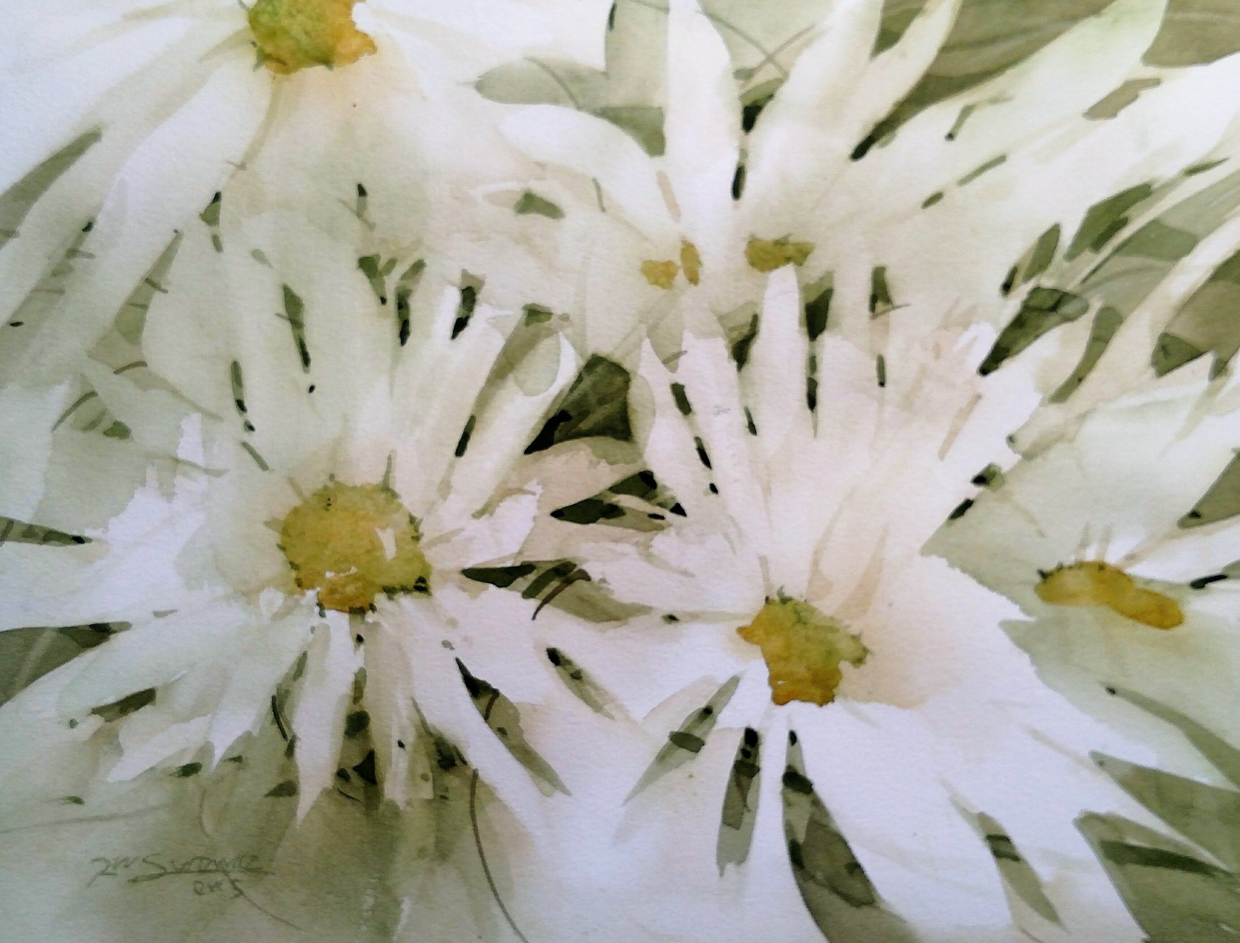 Bunch-of-Daisies-video-1.jpg