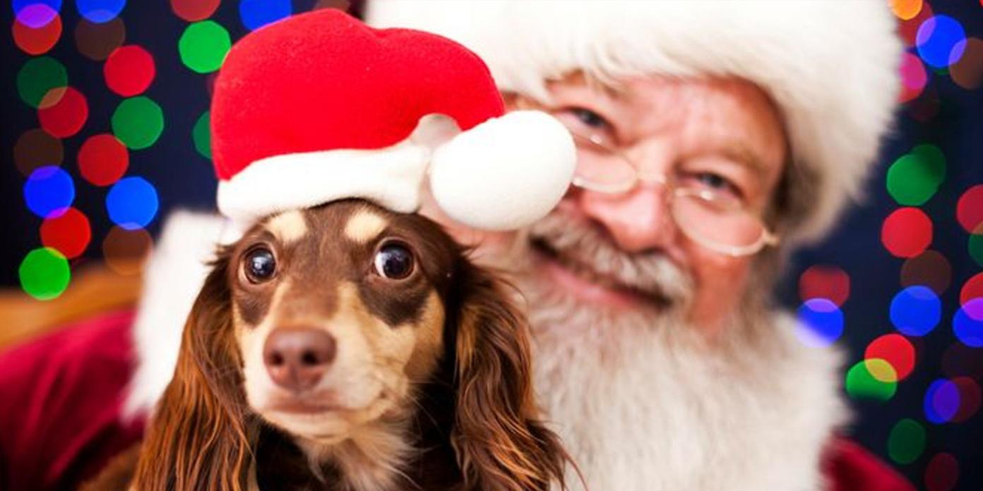 Santa and Dog.png