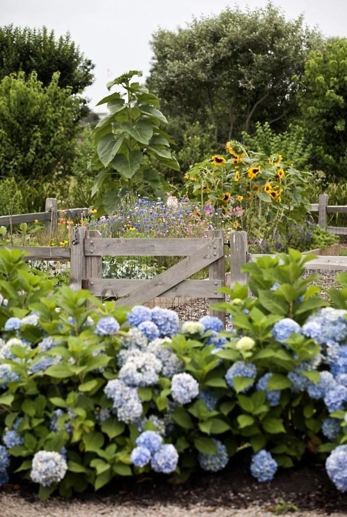brewster-flower-garden-hydrangeas-sunflowers-fence-gardenista.jpg