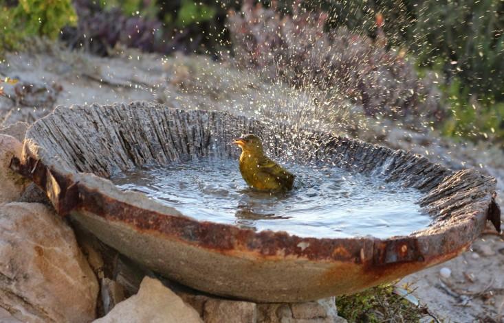 paternoster-cape-weaver-marie-viljoen-birdbath-gardenista.jpg