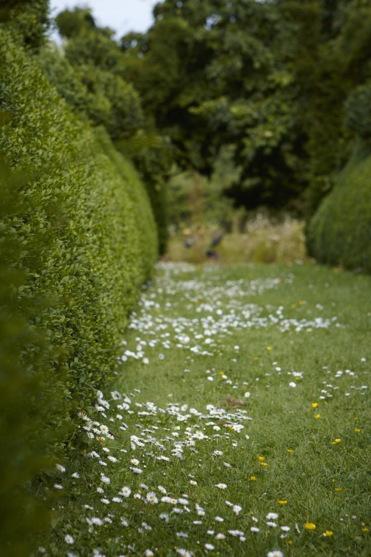 english-boxwood-hedge-daisy-daisies-mown-path-lawn-britt-willoughby-dyer-gardenista-R-120716-N139-print-e1471453408689.jpg