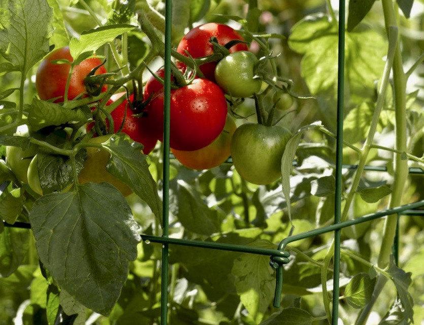 tomato-cages-heavy-duty-fold-flat-gardeners-1.jpg