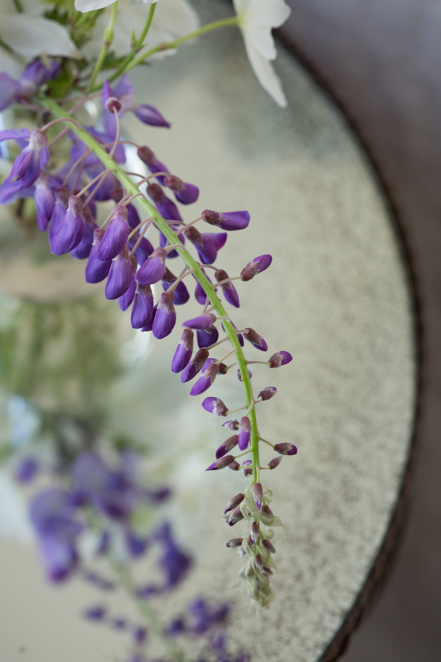 wisteria-mimi-giboin-064-1466x2199.jpg