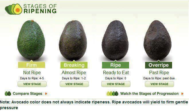 AvocadoRipens.png