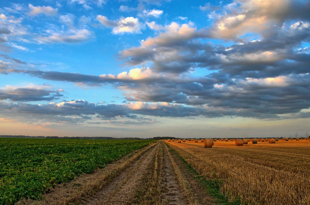 Agriculture-CCO-pixabay_nature-213364_1280.jpg