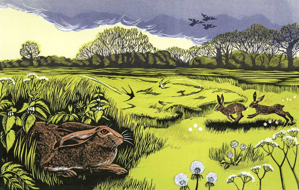 Hares and Swallows