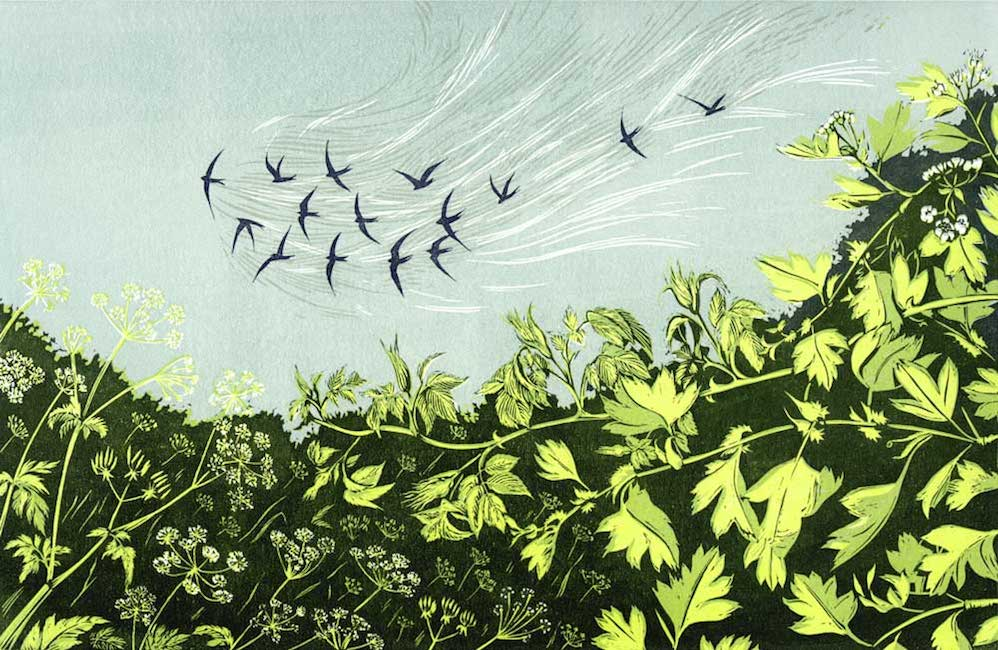 The First Swifts