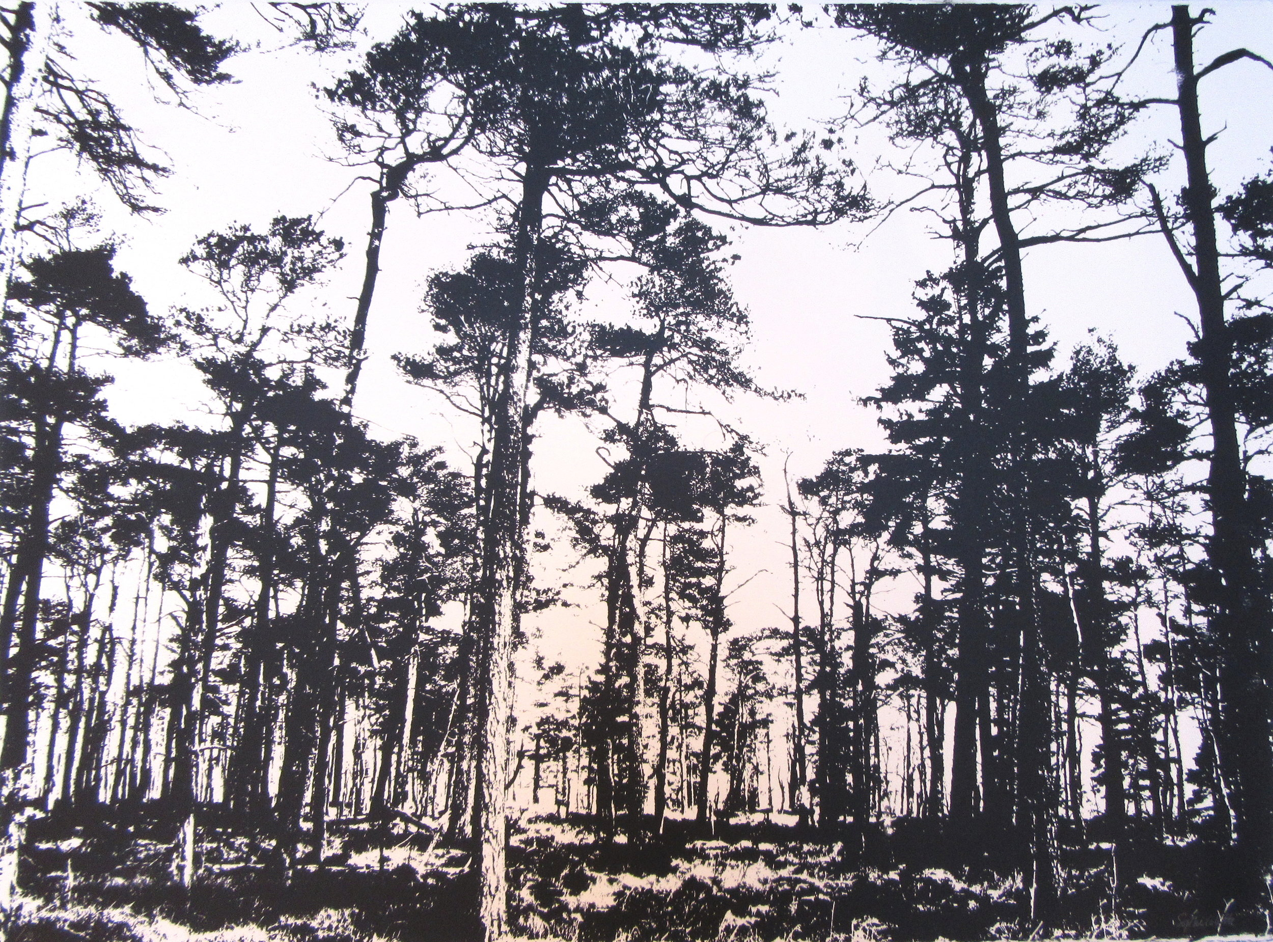 Yorkshire Forest