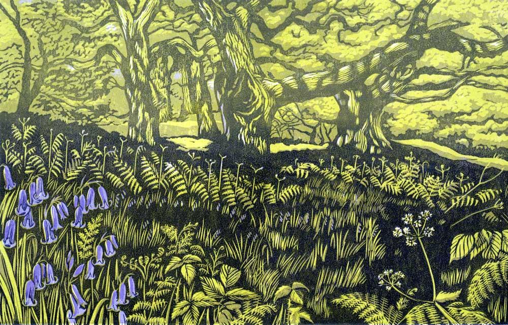 Norfolk Woodland