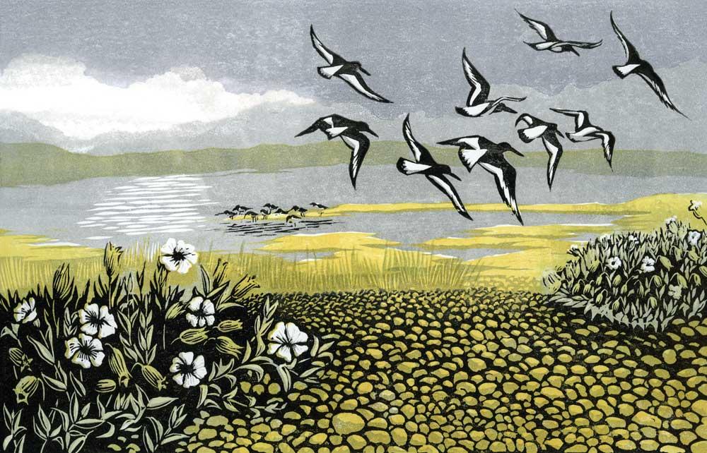 Blakeney Oystercatchers
