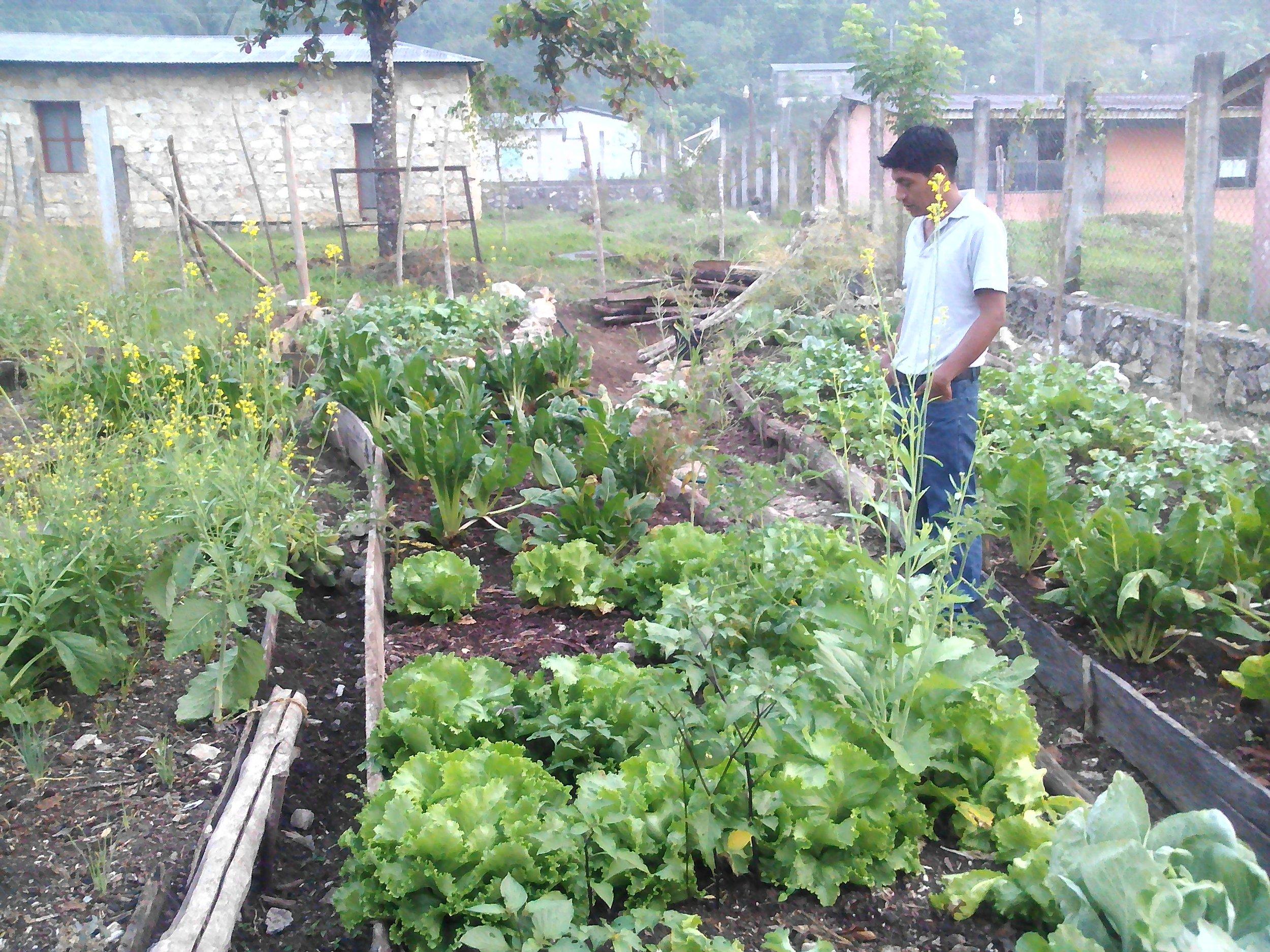 Trabajo colectivo de hortalizas, como un espacio vivo de semillas. Parroquia de Tumbala..jpg