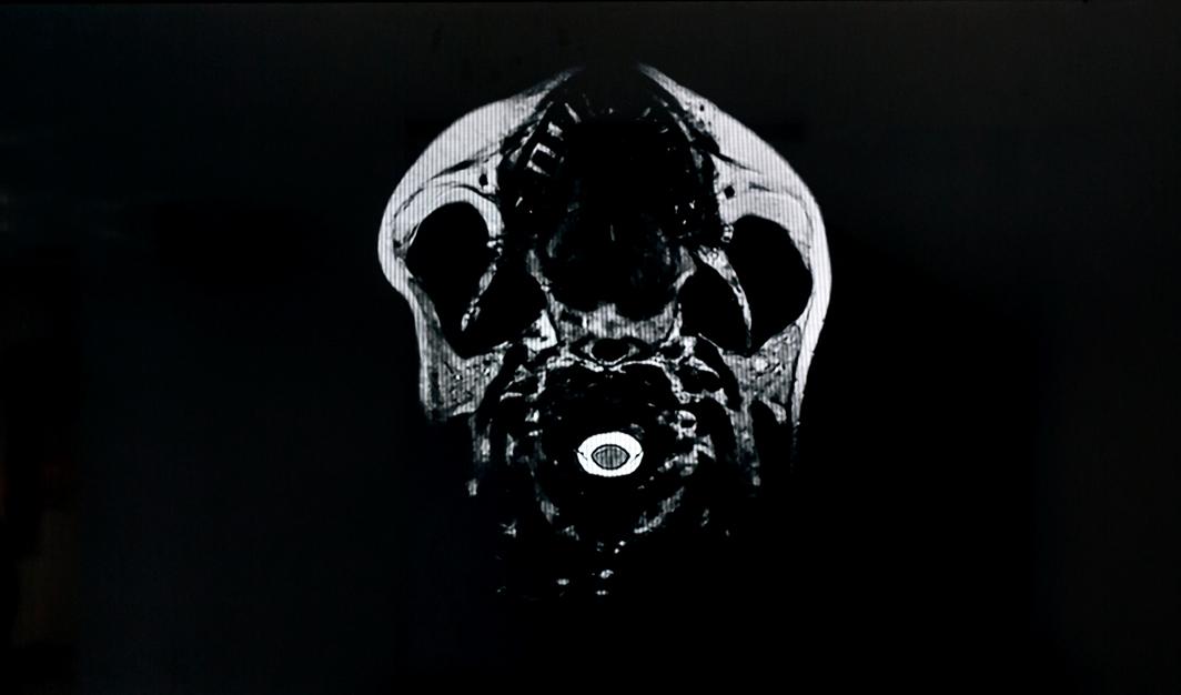 Untitled , 2017. Danne Ojeda. Video still  Paper Brains  exhibition